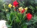 Flori  de gradina perene