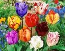 Bulbi, stoloni capsuni, radacini plante , tuberculi si altele