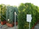 Plante pt garduri vii