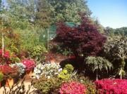 Vanzari plante ornamentale de gradina, arbori, arbusti si flori