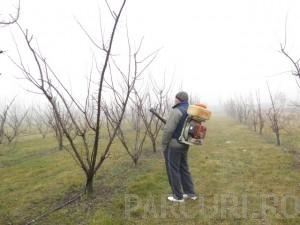 poza Tratamentele fitosanitare sau stropirile pomilor fructiferi mici (inaltime 2,5 metri)