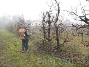 Stropiri aplicate pomilor fructiferi batrani si tratamente fitosanitare aplicate pomilor fructiferi pe rod, cu inaltime peste 3 metri