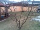 Foto Taieri si tratamente pomi si arbusti fructiferi. Tuns garduri vii, taiere trandafiri si arbusti cu flori
