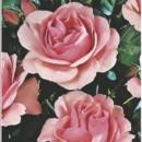 Foto Trandafiri de gradina Polyantha Kimono, planta formata cu radacina in ghiveci de 3.5 litri