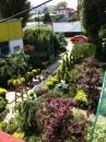 Foto Plantari arbori, arbusti si flori de gradina in ghivece sau cu balot de pamant