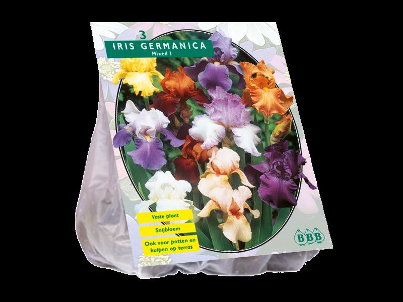Bulbi flori de gradina Iris germanica Gemengd,3 rizom / pachet. Poza 10960