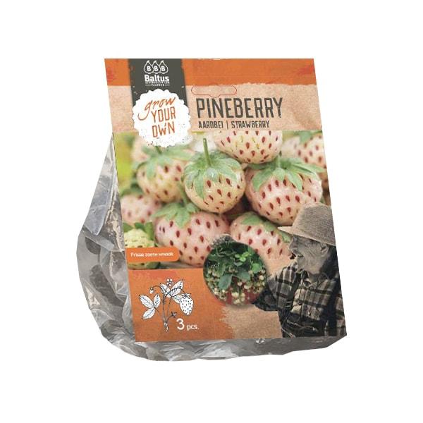 Stoloni capsuni Aardbei Pineberry, 3 stoloni/pachet. Poza 10972