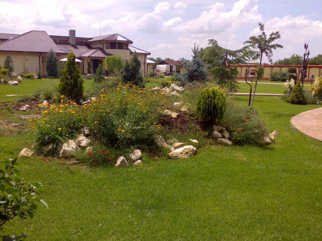 Amenajare gradina cu plante, flori si gazon. Alpinarii cu plante, pietre si bolovani de decor inconjurate de gazon rustic, rezistent la seceta si terenuri aride.