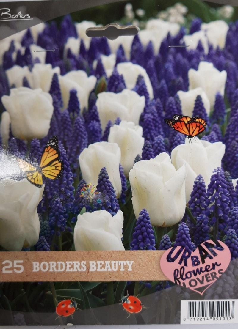 urban flower-border beauty