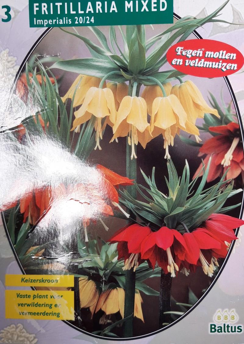 fritillaria mixed
