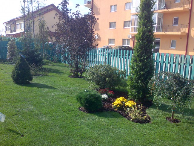 Amenajare gradina rezidentiala mica prin insamantare gazon si plantari arbori si arbusti de gradina.