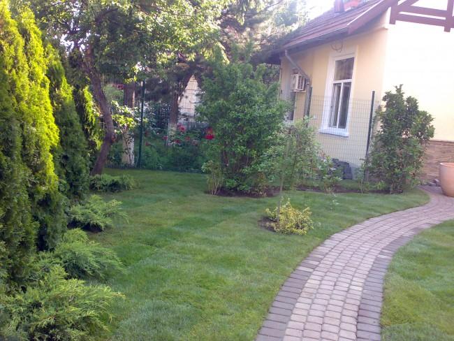 Gradina cu expunere nordica, umbrita, amenajare cu plante ornamentale si gazon rezistente la umbra.