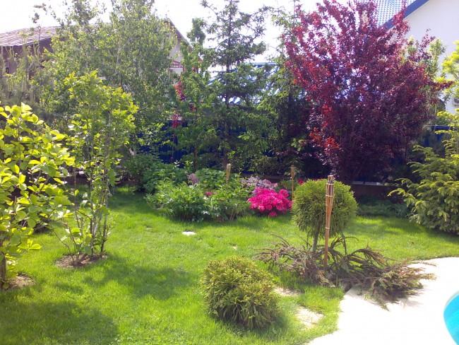 Gradina amenajata cu plante decorative, arbori si arbusti in culori diverse, ornamentata cu scoarta de pin si pietris alb sau colorat.