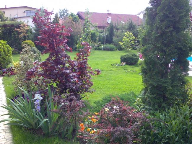Gradina rezidentiala dezvoltata progresiv, pe masura alocarii fondurilor pentru cumpararea plantelor decorative.