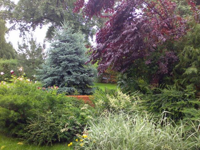 Ansamblu de plante intens colorate folosite in decorarea gradinilor si parcurilor