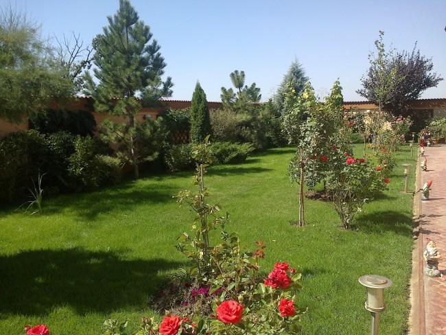 Amenajare peisagistica gradina Bucuresti cu plante decorative de gradina, rezistente la intemperii