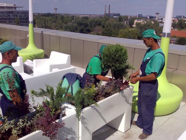 Intretinere si ingrijire plante de interior si de gradina