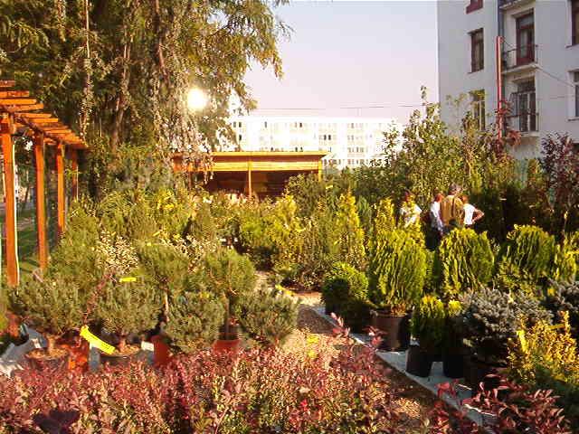Magazin de plante si produse pentru amenajarea si intretinerea gradinilor, arborilor, arbustilor, gazonului, instalatiilor si sistemelor de irigatii si dernaj.