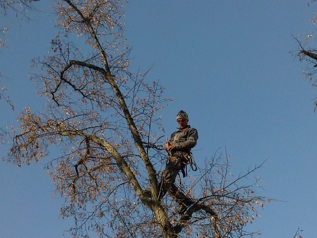 Doborare, taiere, fasonari si toaletari copaci periculosi, arbori batrani, pomi uscati, scorburosi, inclinati sau cazuti. Taiere crengi si ramuri uscate sau periculoase la copaci inalti.
