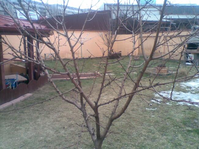 Tratamente cu insecticide, fungicide si acaricide. Servicii de taiere pomi fructiferi, conifere forme, arbusti ornamentali foiosi si arbusti fructiferi, tuns garduri vii, taieri trandafiri de gradina si arbusti decorativi cu flori