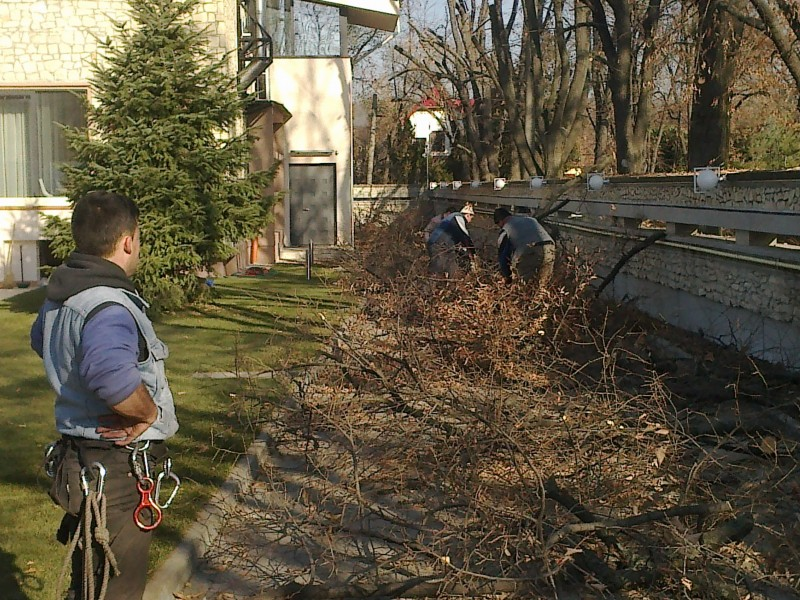 Crengi, resturi vegetale si material lemnos rezultat din taieri arbori, arbusti, copaci si pomi