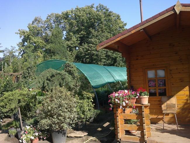 Magazin de plante de gradina online: arbori, arbusti, gazon, instalatii de irigat gradina si servicii de amenajari si intretinere gradini.