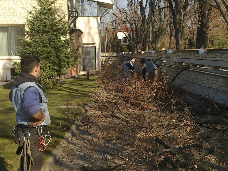Extragere buturugi si cioturi (cioate) ramase de la taierea doborarea arborilor uscati, cazuti sau periculosi