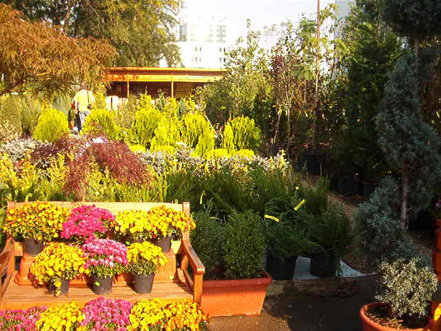 Plante de gradina, flori perene, anuale sau bienale, arbori, arbusti, conifere, gazon si accesorii de gradina