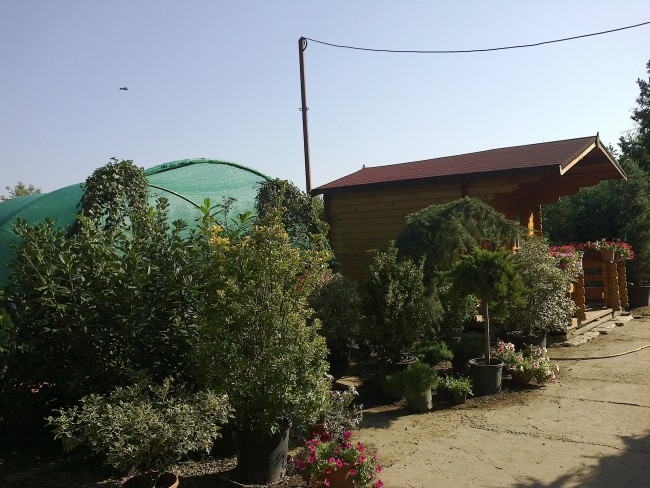 Magazin de plante si materiale pentru amenajari gradini: arbori, arbusti, gazon, sisteme de irigatii, drenuri si servicii de amenajari si intretinere gradini.