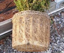 Plantari plante de gradina: arbori, arbusti si flori in ghivece sau containere.