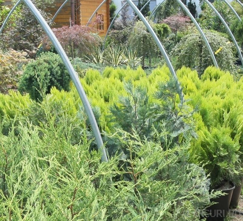 Imagini plante