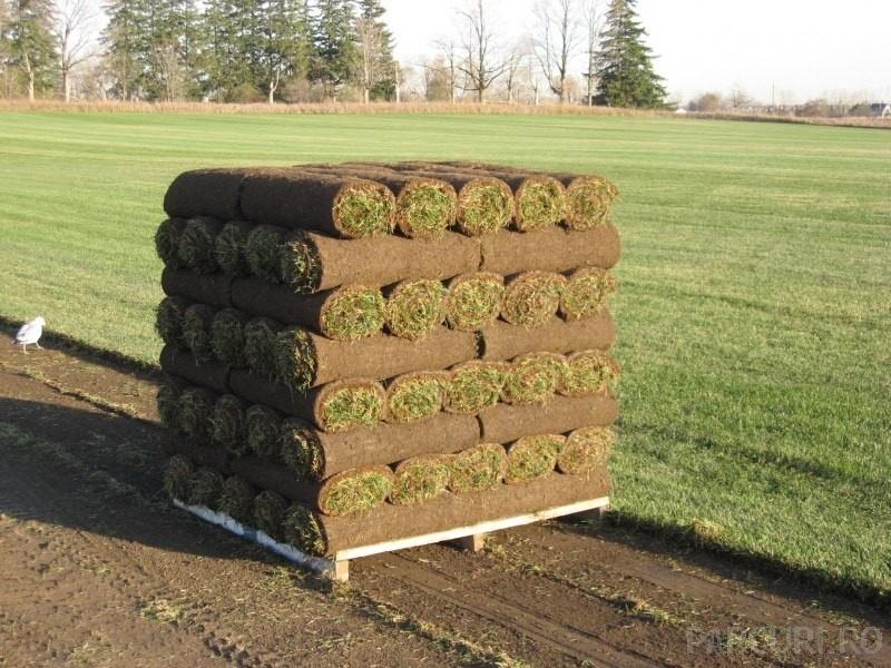 Covor de gazon rulat (rulou de gazon) pentru gazonare parcuri si gradini