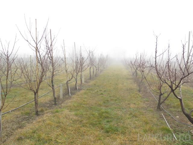 Livezi de pomi fructiferi si plantatii de arbusti fructiferi