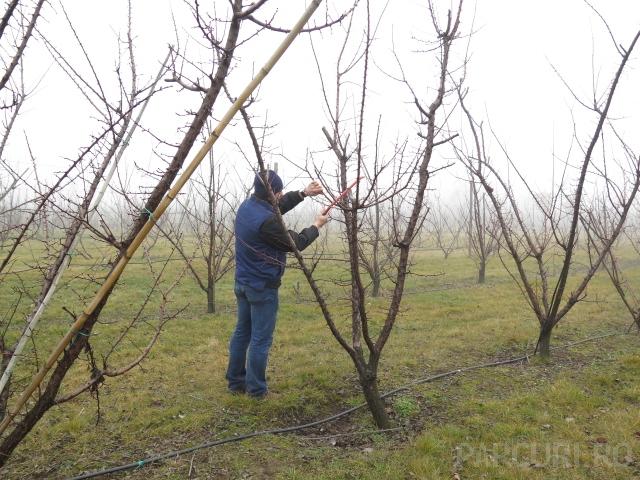 Taieri de formare, stropiri si tratamente fitosanitare pentru pomii fructiferi pe rod.