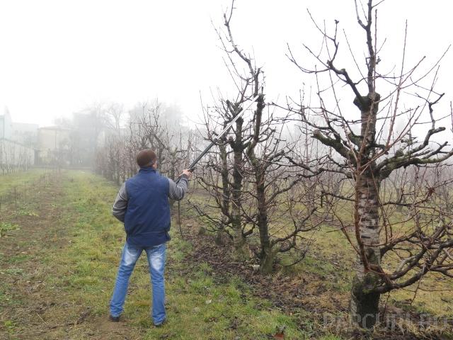 Taieri de formare si regenerare pentru pomii fructiferi batrani. Stropiri si tratamente fitosanitare pentru pomii fructiferi pe rod.