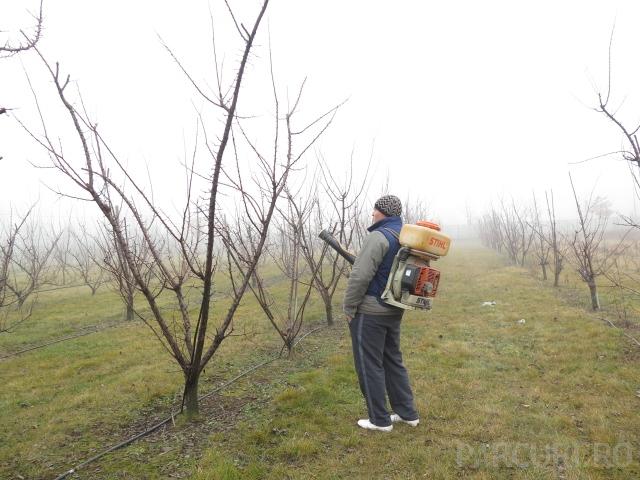 Stropiri si tratamente fitosanitare aplicate pomilor fructiferi mici, cu inaltime pana in 2,5 metri