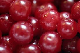 Pomi fructiferi Visini soiul Mocanesti. Puieti fructiferi altoiti.. Poza 9042