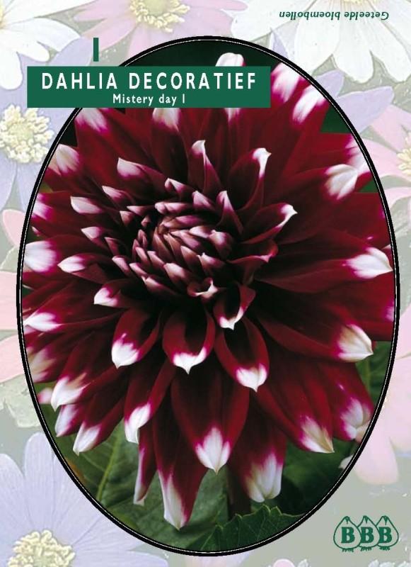 Bulbi plante Dahlia Mistery Day(dalia) , 1 buc/pachet. Poza 9131