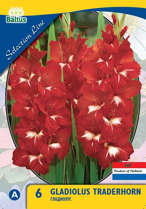 Bulbi plante Gladiolus Traderhorn , gladiole , 25 buc/pachet. Poza 9143