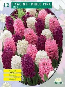 poza Bulbi de zambile, Mixed Pink 12 buc/punga, nuante diferite de roz