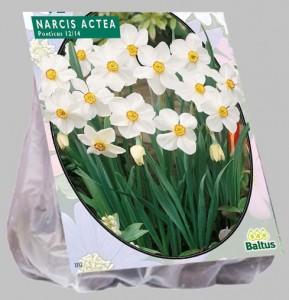 poza Bulbi de narcise 'Actea' 12 buc/punga, floare alba