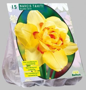 poza Bulbi de narcise 'NARCIS DUBBEL TAHITI' 15 buc/punga, floare galbena