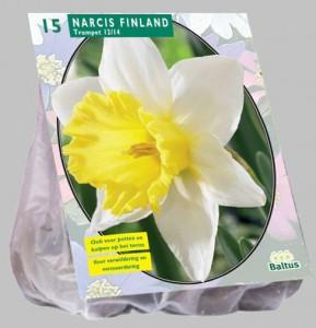 poza Bulbi de narcise NARCIS FINLAND 15 buc/punga, floare alba