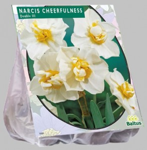 poza Bulbi de narcise 'NARCIS CHEERFULNESS' 5 buc/punga, floare dubla