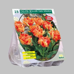 poza Bulbi de lalele  'TULIPA DUBBEL WILLEM VAN ORANJE' 25 buc/pachet, culoare rosu-portocaliu