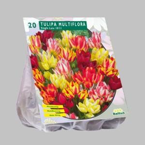 poza Bulbi de lalele  'TULIPA MULTIFLORA' 20 buc/pachet, culori mixte
