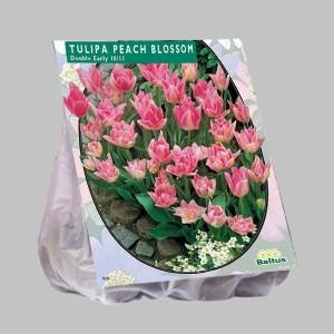 poza Bulbi de lalele  'TULIPA PEACH BLOSSOM'  20 buc/pachet, culoare roz