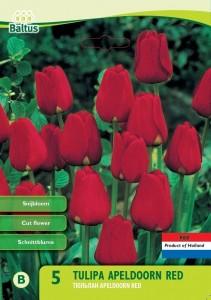 poza Bulbi de lalele  'APELDOORN RED' 5 buc/pachet, culoare rosie