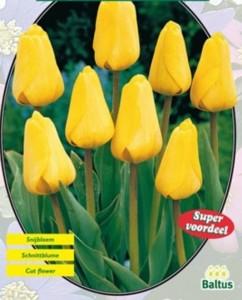 poza Bulbi de lalele  'TULIPA APELDOORN GEEL'  5 buc/pachet, culoare galbena