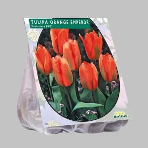 poza Bulbi de lalele  TULIPA ORANGE EMPEROR  20 buc/pachet, culoare portocalie